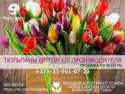 Продажа тюльпанов оптом. Низкие цены