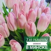 Тюльпаны Голландские оптом к 8 марта